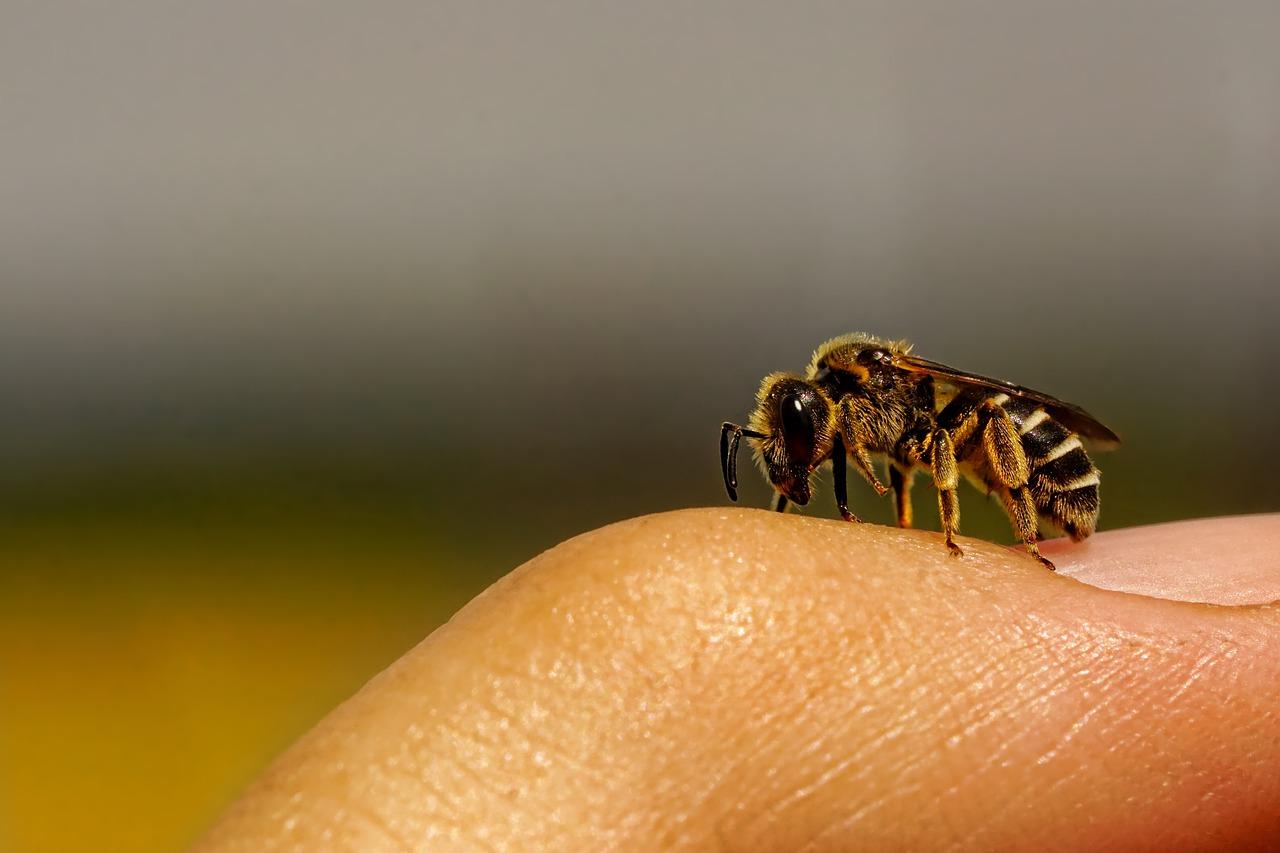 World Bee Day 2020 – Wild- und Honigbienen – Einblicke in eine faszinierende Welt